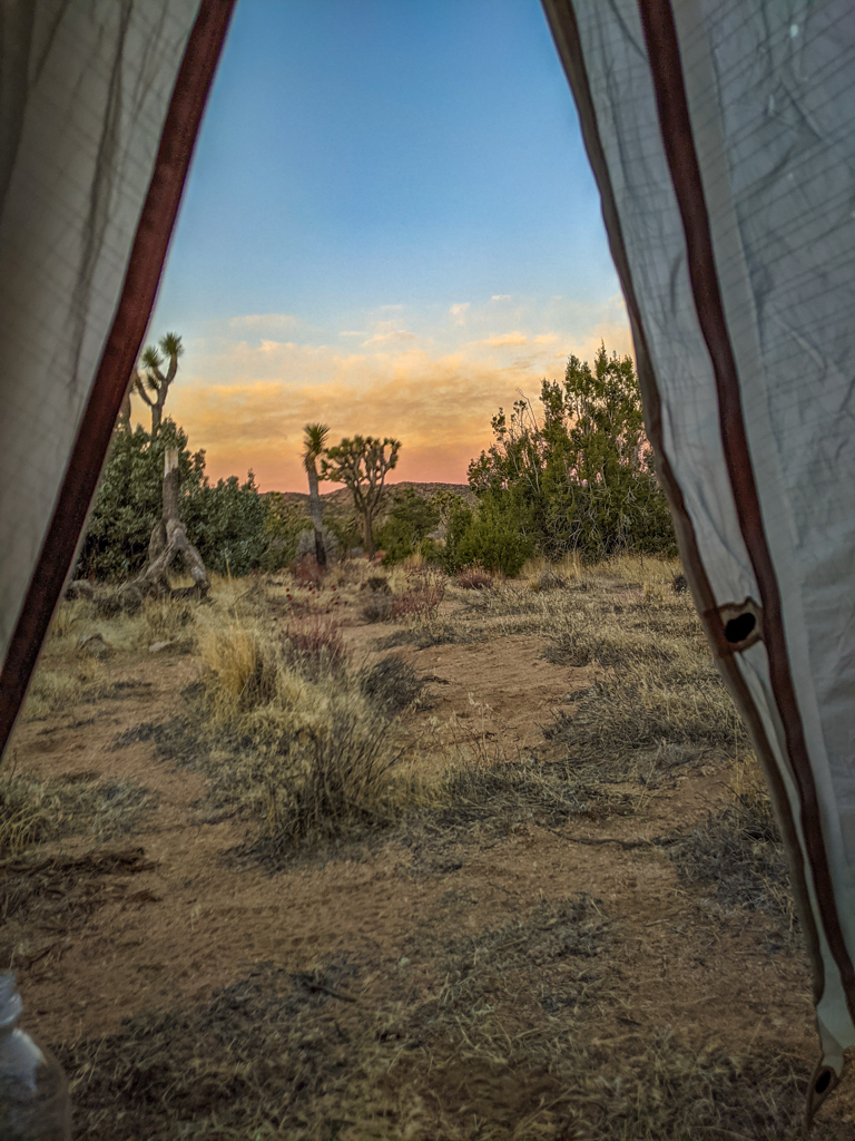 View out of the tent vestibule reveals Joshua Tree at sunrise with pink and yellow clouds on the horizon.