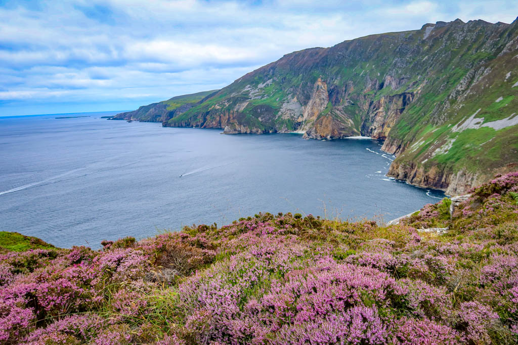 Slieve League Cliffs with blooming heather in the foreground