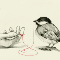 The Robin and the Red Thread.