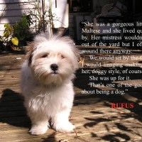 Love conquers Rufus