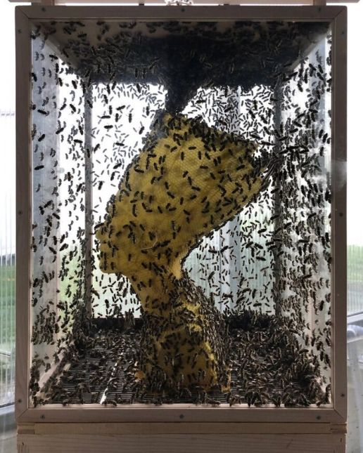 60000 Bees creating honeycomb around the 3D model