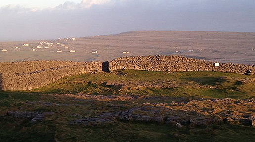 Cottages on Inishmore. Photo: Sheila Langan