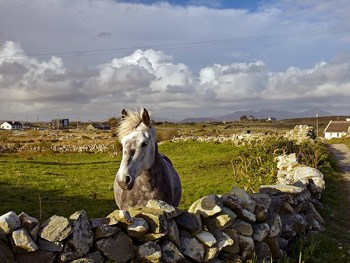 A stone wall keeps a horse from wandering in Connemara. (Photograph by Medford Taylor, National Geographic)