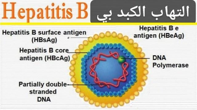 فيروس الكبد بى الأستفسار بخصوص فيروس الكبد بى والأسئلة المتكررة عنه Hepatitis B Helal
