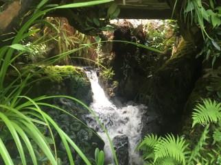 sd1-botanic-waterfall
