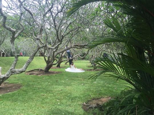 sd1-botanic-wedding