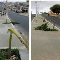 Vandalismo gratuito e depredação das palmeiras da Tv. Santa Rita.