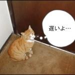 Friendly_Cat_