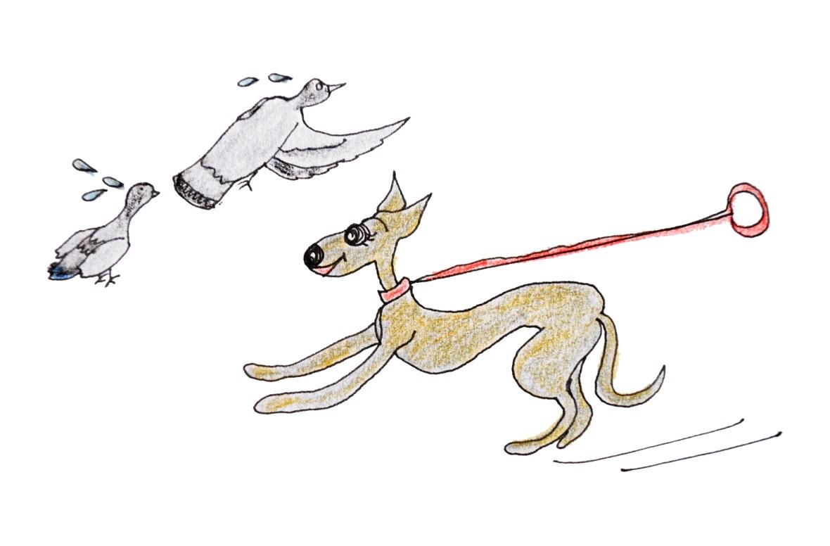 犬の習性を知る【犬のしつけ・犬の育て方 vol.3】