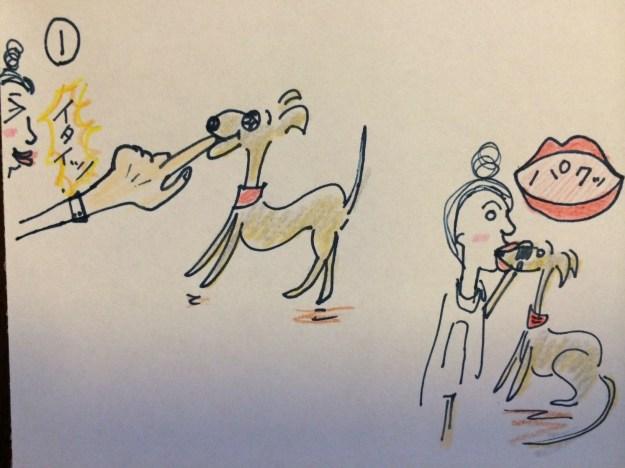 しつけ|咬む·かじる【犬の育て方29巻】