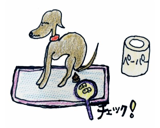 犬の排泄について|ウンチ【犬の育て方 vol.61】