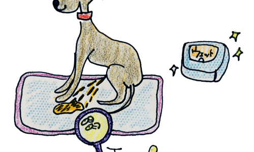 犬の排泄について|オシッコ【犬のしつけ・犬の育て方 vol.59】