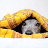 犬寝袋&カフェマットへの想い・誕生秘話・使い方|いつでもどこでも、ぬくぬく寝袋