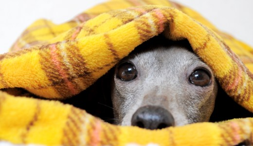 犬寝袋&カフェマットへの想い・誕生秘話・使い方