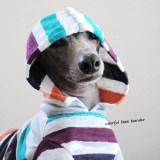 「新作犬服」上質なリネンが愛犬を心地よく包んでくれる|カラフルなリネンボーダー
