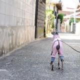 「イタグレ服」秋冬の新作第三弾|トレーナーロンパース|桜色|PapaとMamaと散歩に。