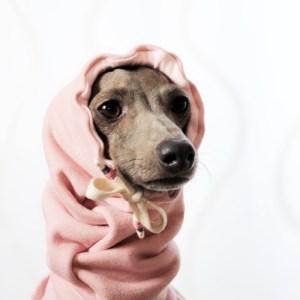 イタグレ・ウィペット犬服|お耳ぬくぬくスヌード&ネックウォーマー|選べる3カラー(ポピーレッド/桜色/イタグレグレイ)