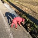 イタグレBuono!の散歩風景+俺の散歩風景=淡路島の風景