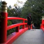 「淡路島パワースポット」国生み神話の伊弉諾神宮で感じる神聖な風011