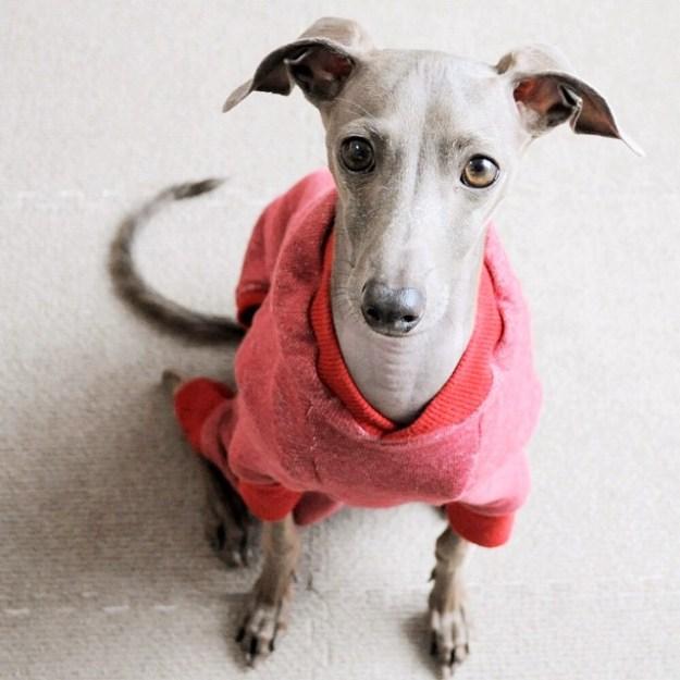 「犬服」年中着れるトレーナーが選べる3タイプ×3カラーにリニューアルしました!
