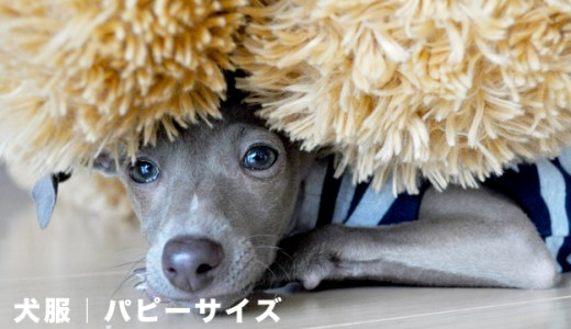 犬服パピーサイズ:パピー服を選ぶ時の5つのポイント