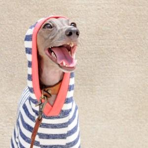 「秋の新作犬服」柔らかな縞模様と小さな物入れのお洋服 「小さな物入れに、なに入れようかなぁ〜♪」