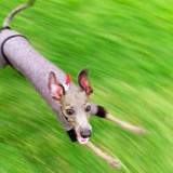 スマホで簡単に、いつもと違った愛犬の「躍動的な」「凶暴な」写真を撮る方法を発見