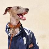 41日かかって遂に完成「犬服」My dog silhouette. The dog's name is…「世界に1つだけの洋服」|ロンパース(ボーダー裏地付き)×選べる3カラー