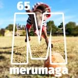 【ARATA HOUSEメルマガ Vol.65】朝の一コマ 2015/11/13発行