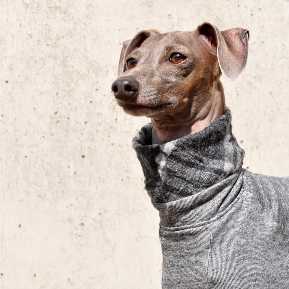 """「柔らかな春の犬服」""""くしゅくしゅ""""ウールチェックトレーナー。シンプルなコーデが洒落上級者♡"""