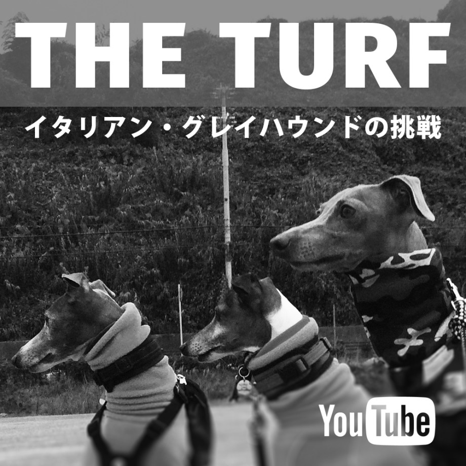 THE TURF「イタリアン・グレイハウンドの挑戦」予告編