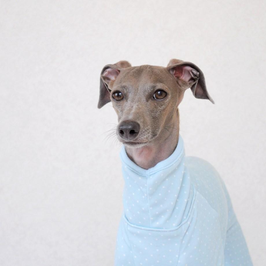 犬服ぱじゃま「小さなまる。」2015年冬の新色登場!なぜ!?ぱじゃまなの?誰も注文しないでしょ!?そんな疑問に勝手に答えます。