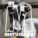 【ARATA HOUSEメルマガ Vol.81】「ドライフードの選び方」イタグレBuono!のごはん事情(4,382文字/画像3枚)|2016/3/28発行