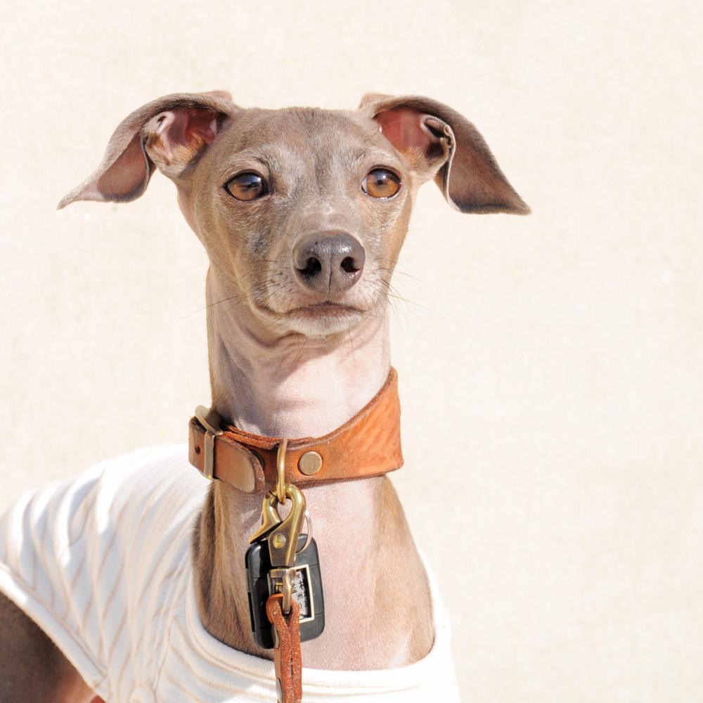 「飼い主が自分で判断するべきこと」愛犬にとってのワクチン接種とは?「命を守る」「法律だから」「製薬会社、病院の思惑」「皆んながやるから」どれが本当なの?