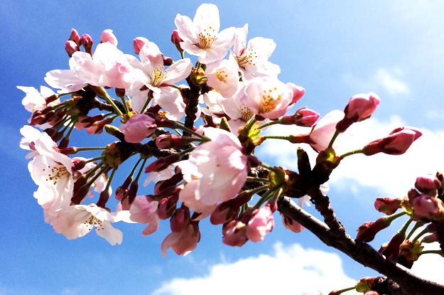 4月1日に感じたこと。「海・空・太陽・雲・桜・チューリップ・名を知らぬ花」