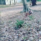 木々の中を元気にいっぱいに駆けまわるイタグレのアンバー「Instagramギャラリー Story006」