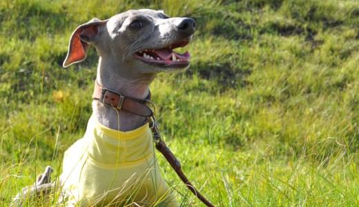 「5月の犬服20選」紫外線対策やフィラリア予防が必要な季節の始まりです。