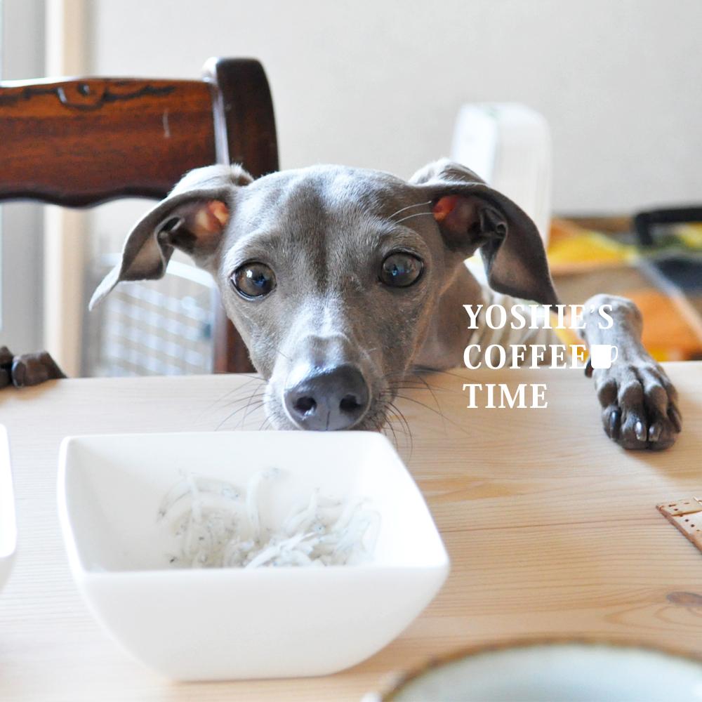 イタグレの5つの習慣?癖?個性?を発表しよう。-YOSHIE'S-COFFEE-TIME