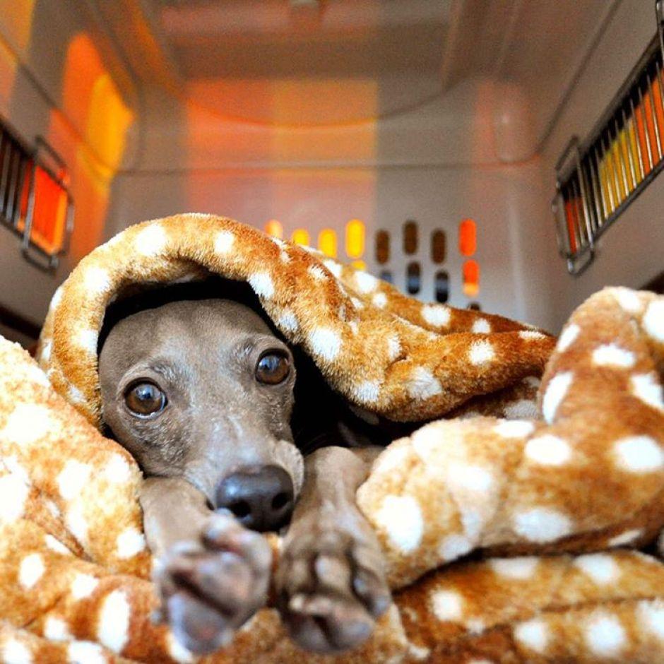 寒い日もぬくぬく、お留守番も安心、カフェでリラックス、愛犬の可愛い写真も撮れちゃう、とっても便利な「寝袋&カフェマット|あったかリッチなオシャレ寝袋」