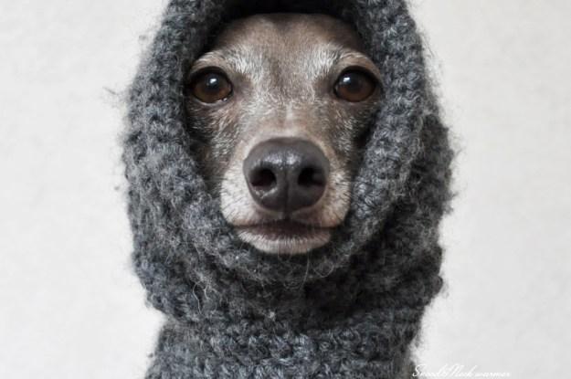 12月の犬服:クリスマスに大晦日、寒い冬を暖かく過ごす犬服20選