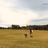よっちゃんとワイマラナーが広い芝を散歩するとこうなる(笑)
