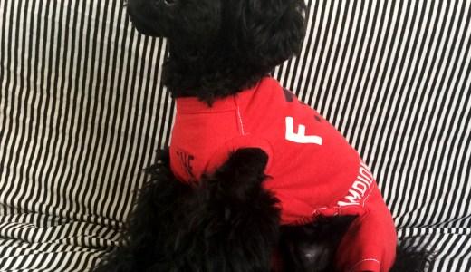 「一からの犬服作り7」お洋服が完成したら確認する6つポイント