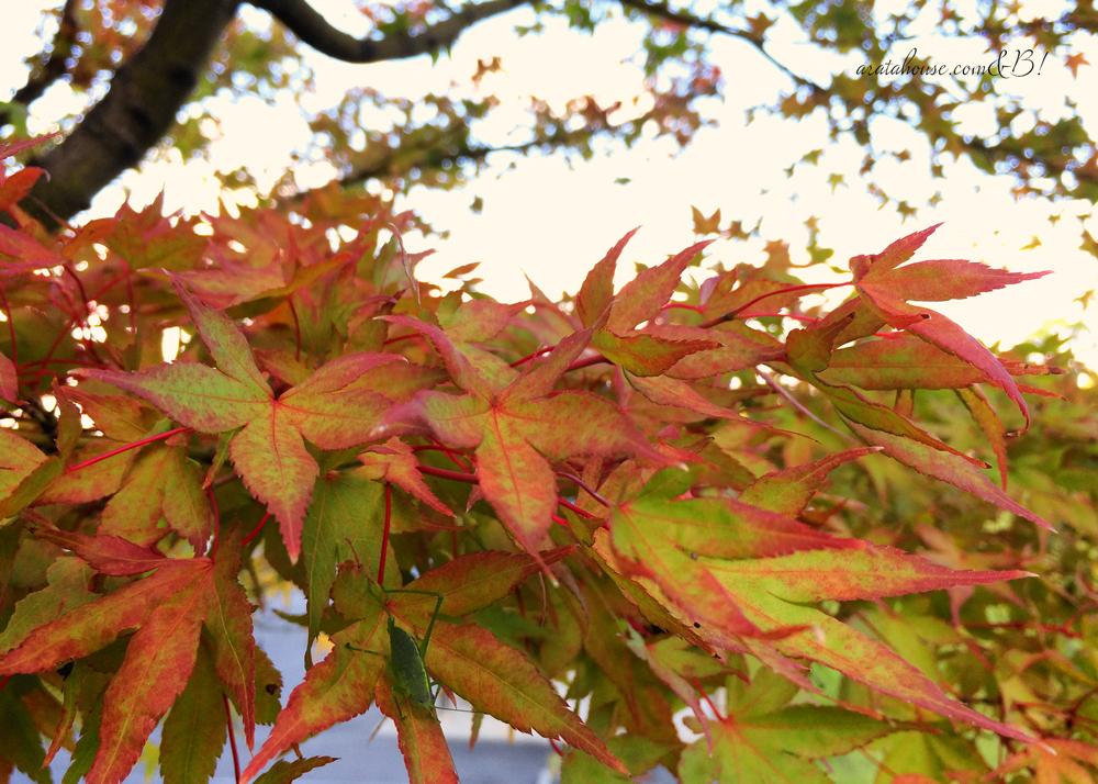 「淡路島の暮らし」少し秋を感じる朝。