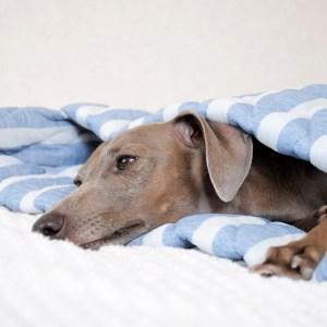 寝袋&カフェマット|暑い日も快適に「ひんやり涼しい」「吸汗速乾」「しなやかで、やわらかい」|マーベラスクールキルト生地|選べる12カラー
