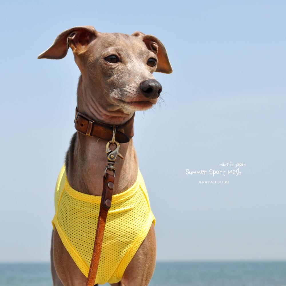 犬服 Summer Sport Mesh 通気性、伸縮性、速乾性に優れたメッシュ 選べる4タイプ×3カラー(パステルブルー/パステルイエロー/パステルピンク)
