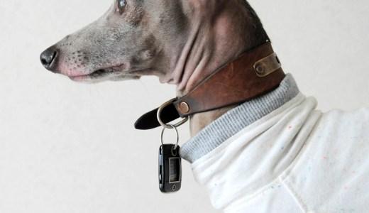 ペットの災害対策:災害発生5分間で愛犬にしたこと(体験談)