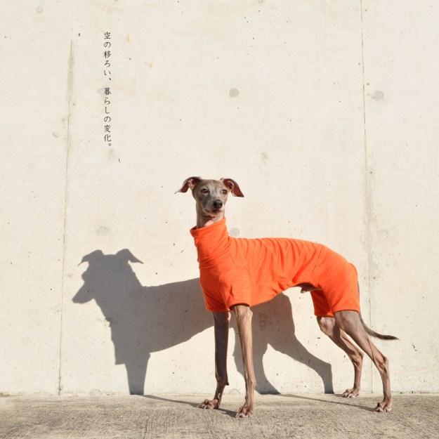 犬服|空の移ろい|日本製スペック天竺ニット|選べる4タイプ×3カラー(蒲公英色/橙色/茜色)+Aくらぶメンバー限定6カラーあり