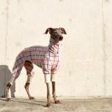 「イタグレ服/ミニピン服ご依頼ランキング」朝晩がだいぶん涼しくなりました。愛犬にとっては少し肌寒いかもしれませんね。