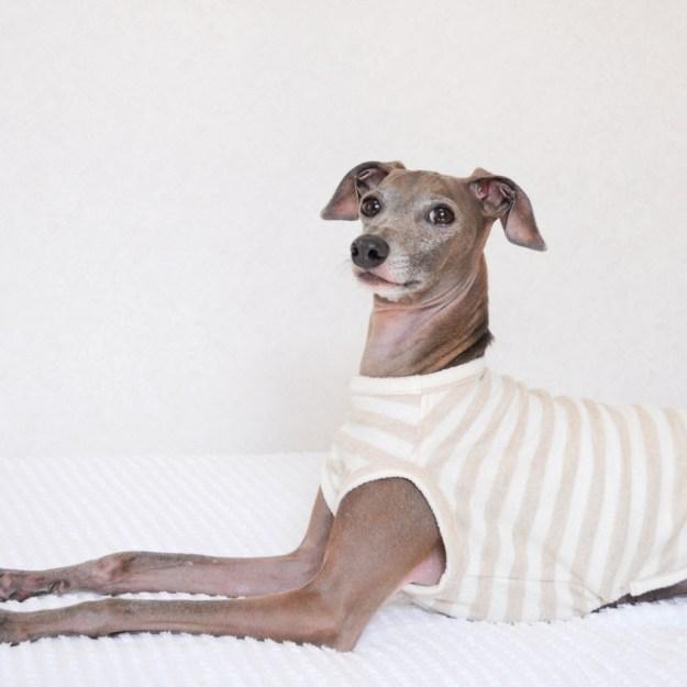犬服 柔らかな縞模様のお洋服 ネップ裏毛ボーダー 選べる4タイプ×2カラー(亜麻色/空色)