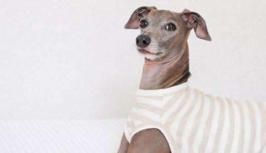 9月に入ってお腹を壊し下痢になる犬が増えています!